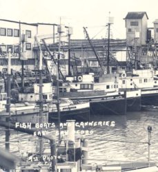 Photo of a fleet of fishing boats in San Pedro Harbor. (photos: courtesy Los Angeles Maritime Museum)