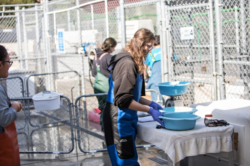 Volunteers prepare meals for the rehabilitating mammals. (photo John Mattera Photography)