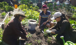 Local Organic Produce Farm Feeds the Hungry